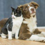Mājas (istabas) dzīvnieku reģistrācija, labturība un pārvadāšana